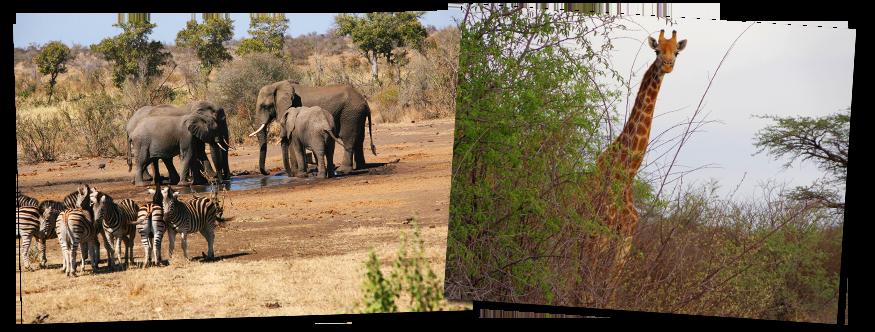 African Safari Wildlife
